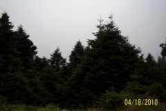 04-2010013